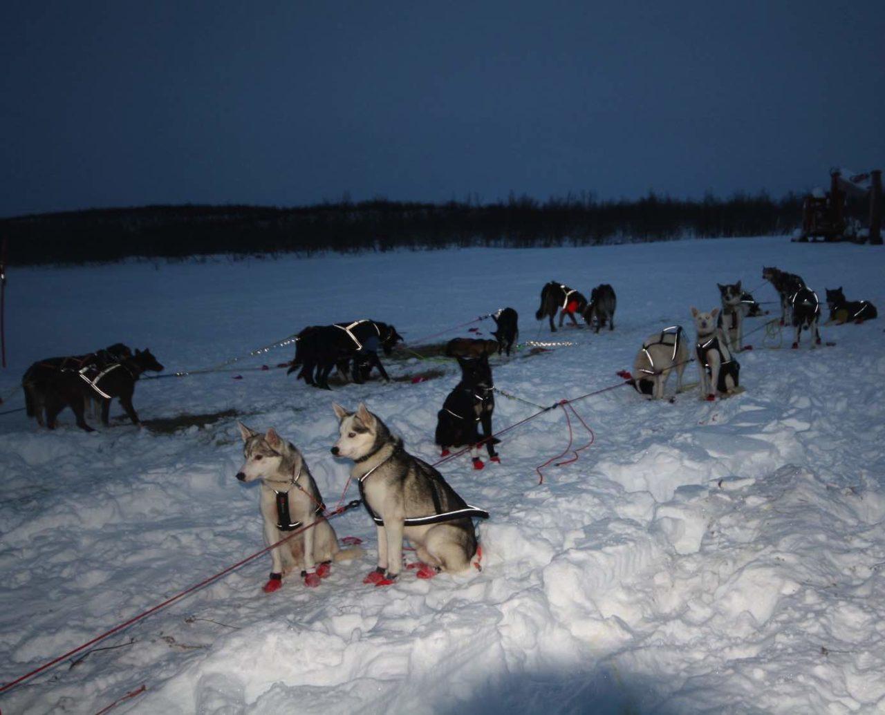 hunder-hundespann-1280x1035.jpg